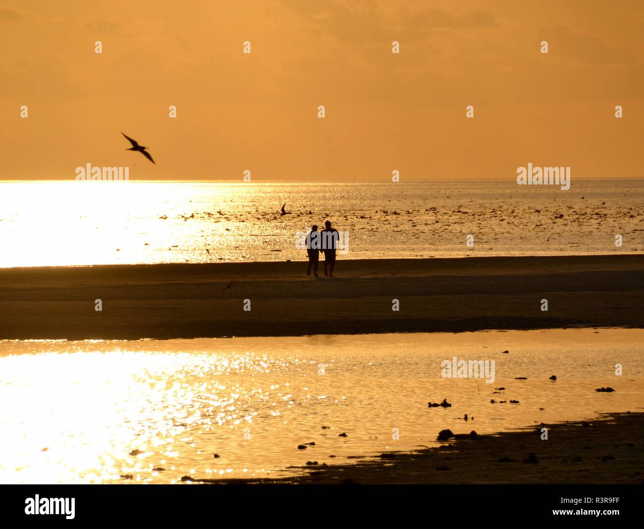 Two lovers strolling on a sandbar in golden sunset evening light on the Great Barrier Reef in Australia - Stock Image