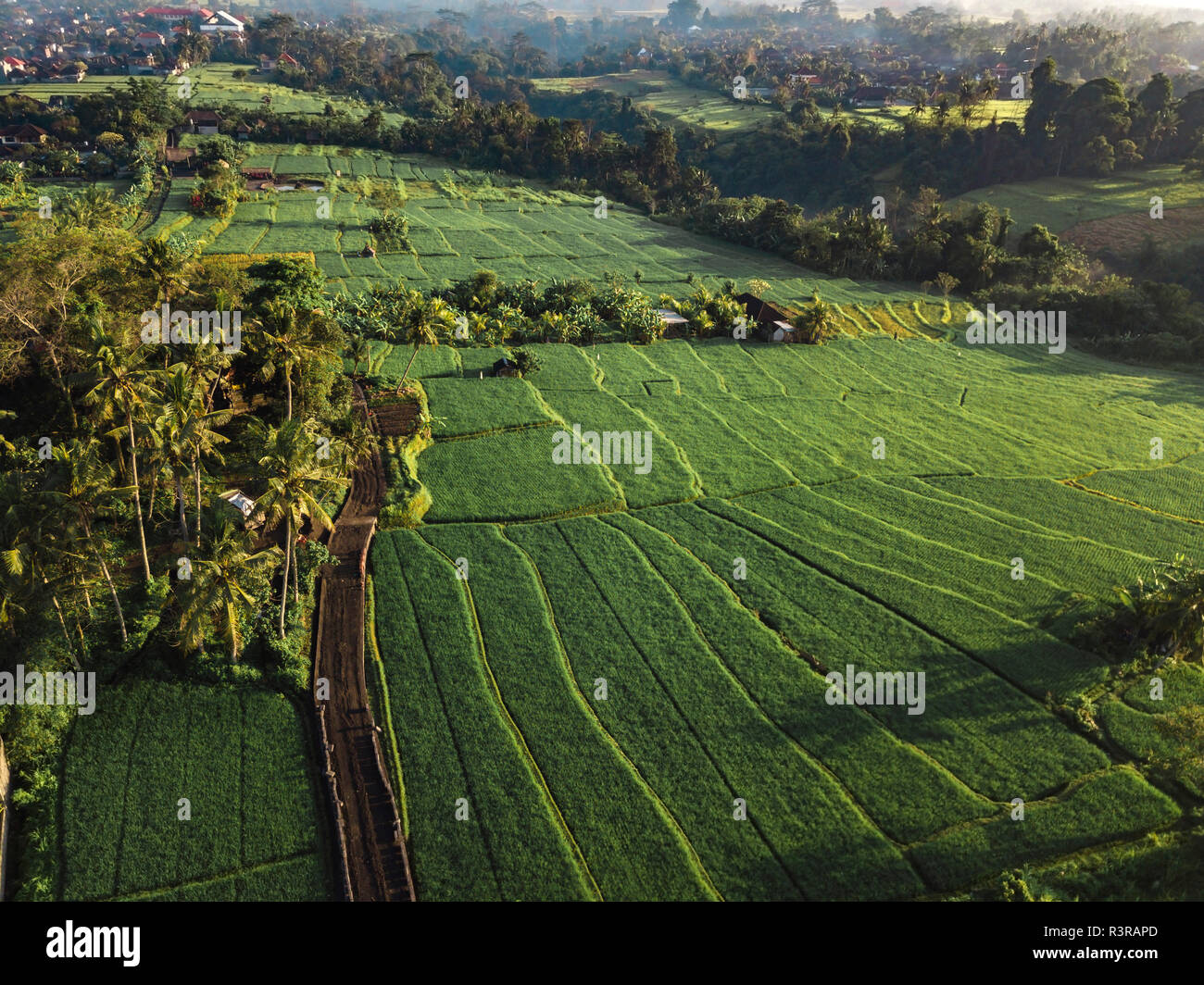 Indonesia, Bali, Ubud, Aerial view of rice fields - Stock Image