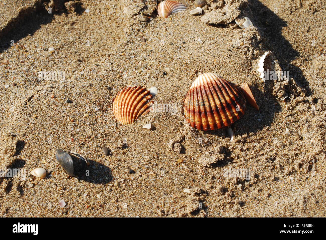 Playa de Barcelona - Stock Image