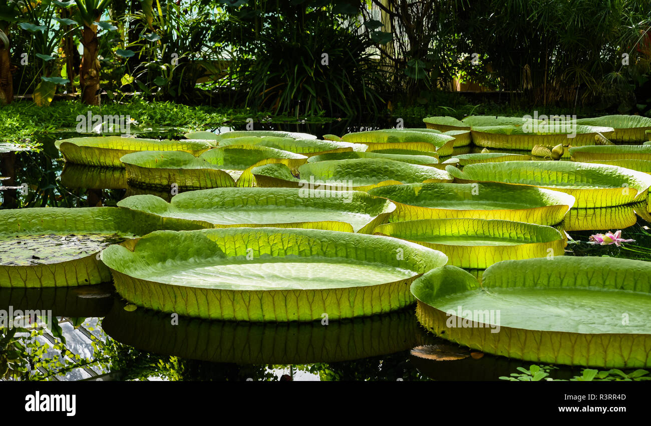 Local tourists visiting the glass houses and the santa cruz water lilies in  the National Botanical Gardens of Meise, Flanders, Belgium - Stock Image