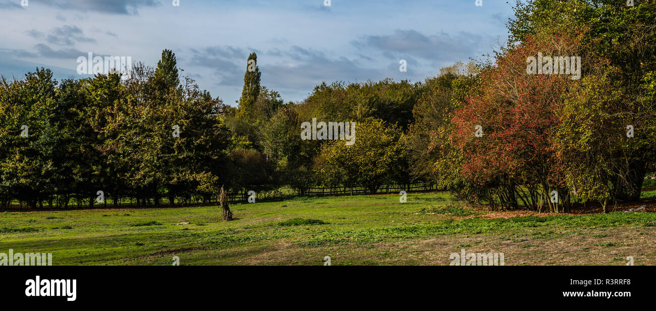 Extra large autumn view over the grass meadows and trees in the Boudewijn city park in Brussels, Belgium Stock Photo