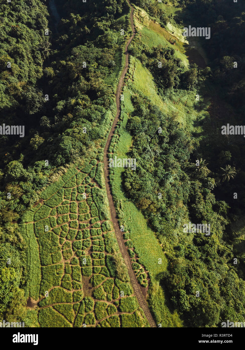 Indonesia, Bali, Ubud, Aerial view of path at hills - Stock Image