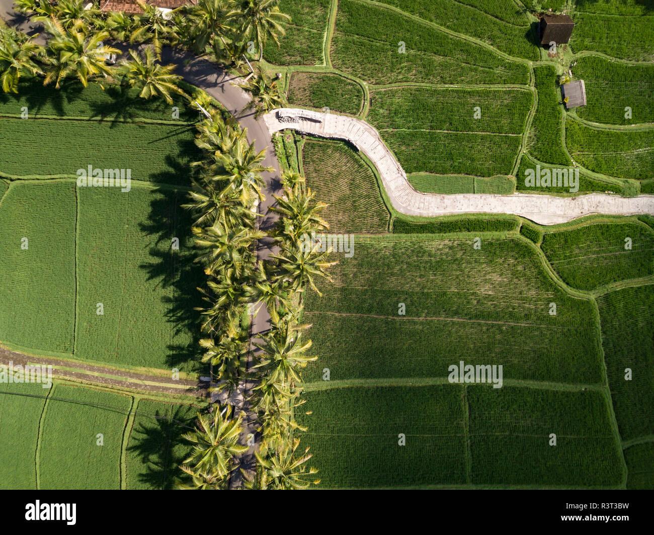 Indonesia, Bali, Ubud, Aerial view of rice fields - Stock Image
