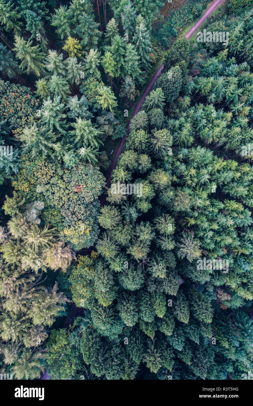 UK, Wales, pine forest seen from above - Stock Image