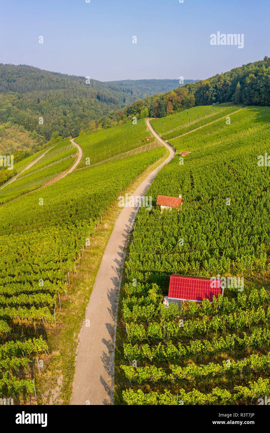 Germany, Baden-Wurttemberg, Aerial view of vineyards At Gundelsbach Valley - Stock Image