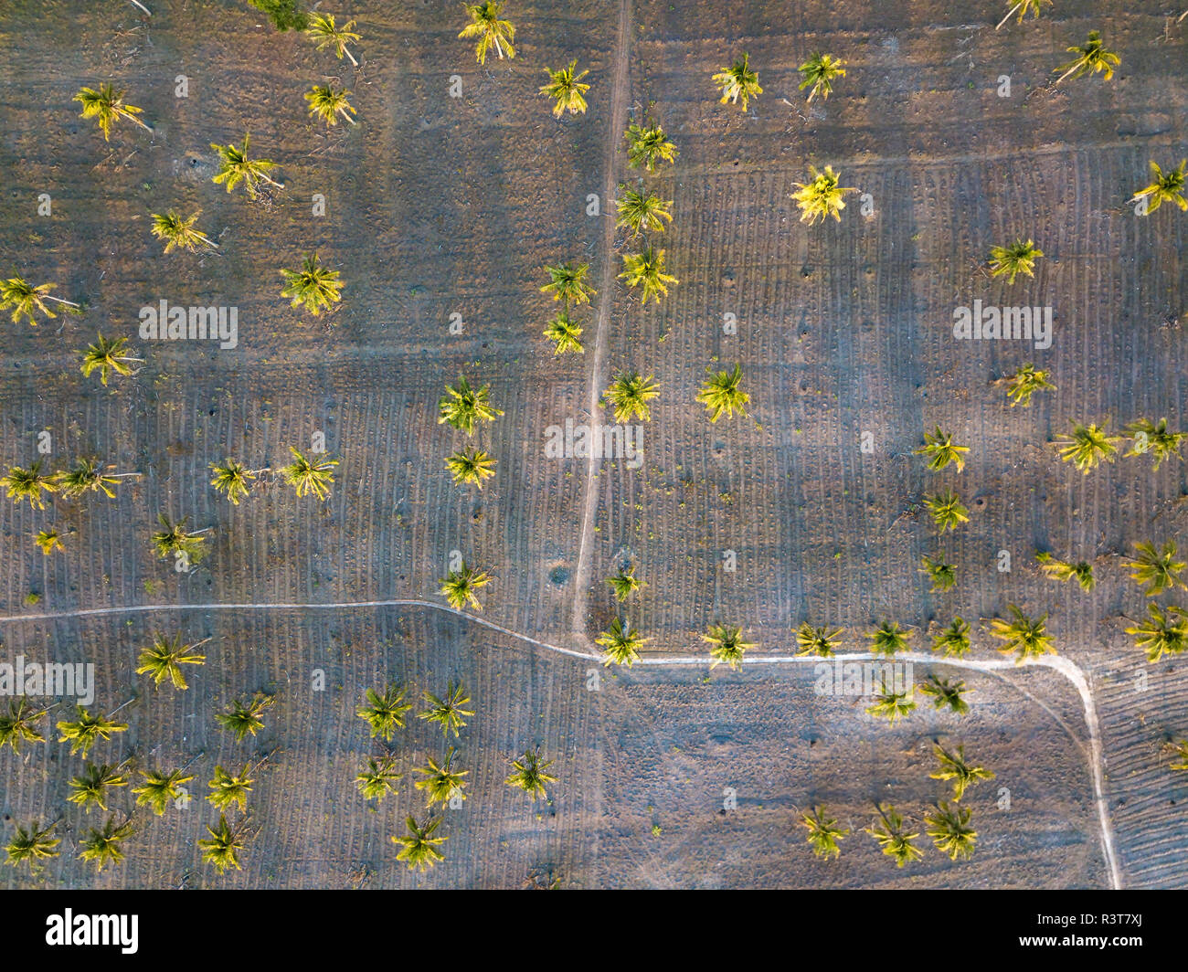 Indonesia, Lombok, Aerial view of palms and ways - Stock Image