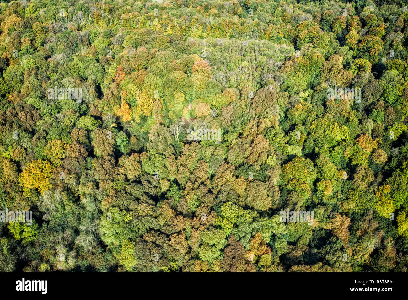 UK, Wales, autumnal forest seen from above - Stock Image