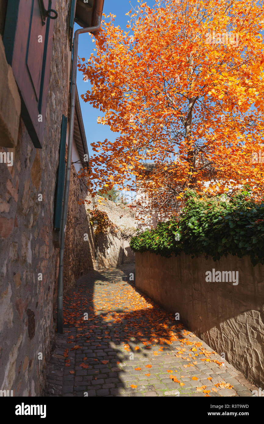 Germany, Rhineland-Palatinate, Freinsheim, city wall and empty way in autumn - Stock Image