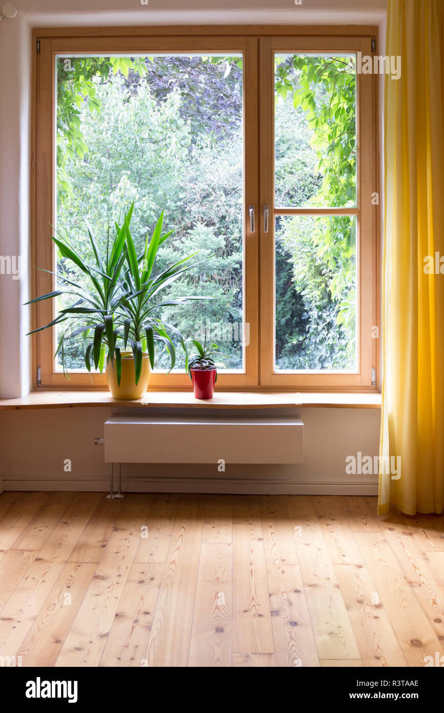 Potted plants at window sill - Stock Image