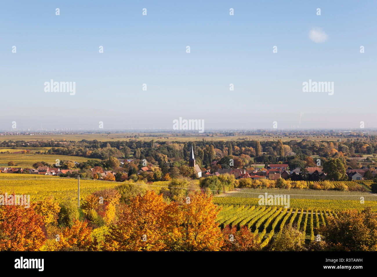 Germany,Rhineland-Palatinate, Pfalz, German Wine Route, wine village Forst and vineyards in autumn colours Stock Photo