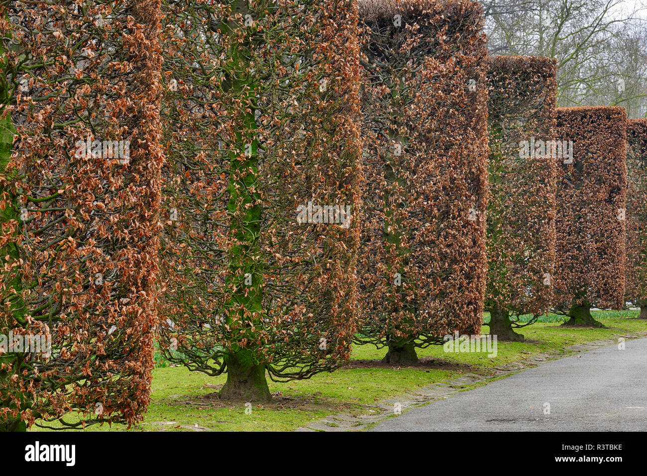 Belgium, Brussels, Parc des Expositions, pruned trees in autumn - Stock Image