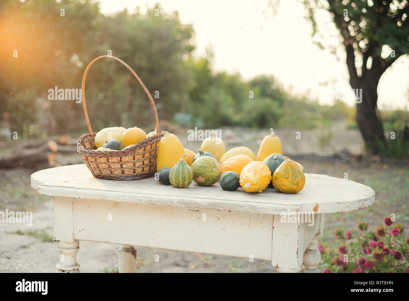 Autumn pumpkins on a wooden table in the garden - Stock Image