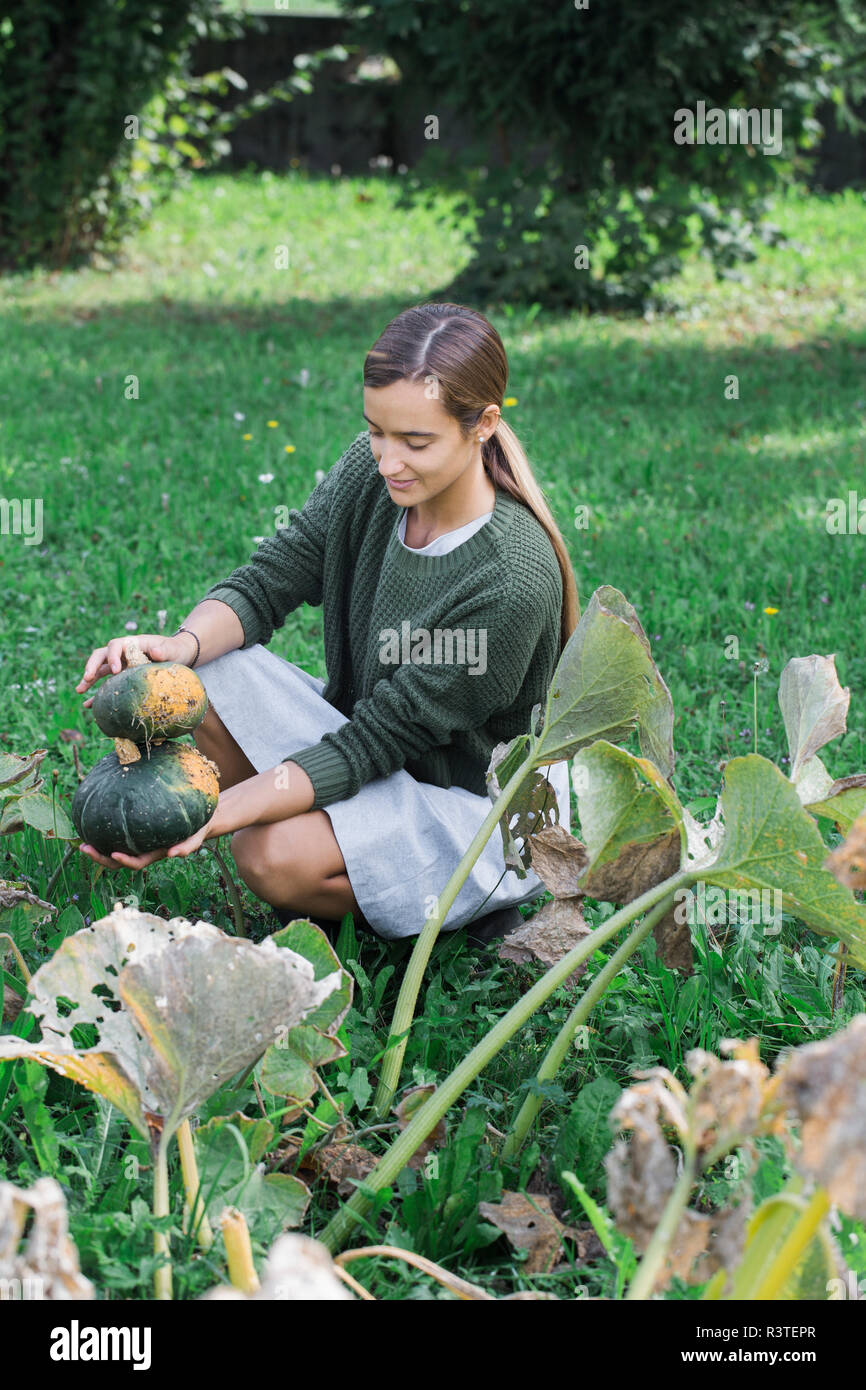 Young woman harvesting pumpkins in the garden - Stock Image