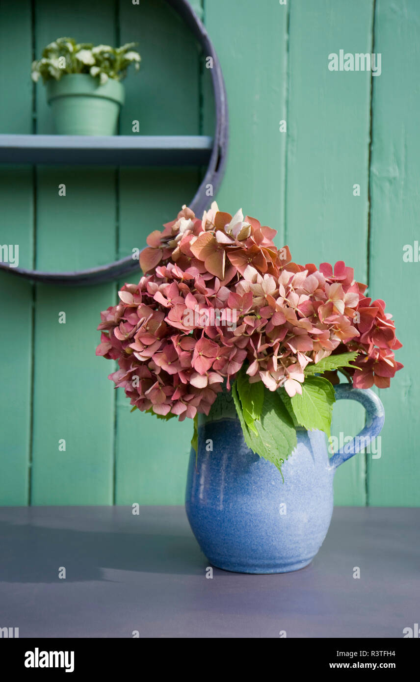 Flower decoration, flour sifter, hortensia in stone jug - Stock Image
