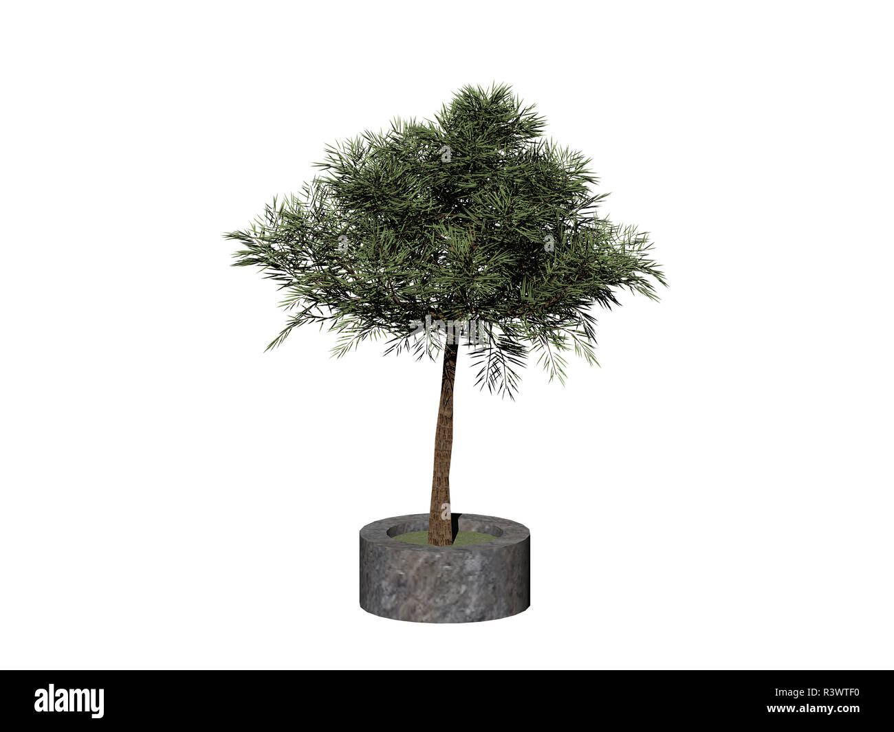 tree in planting bowl isolated - Stock Image