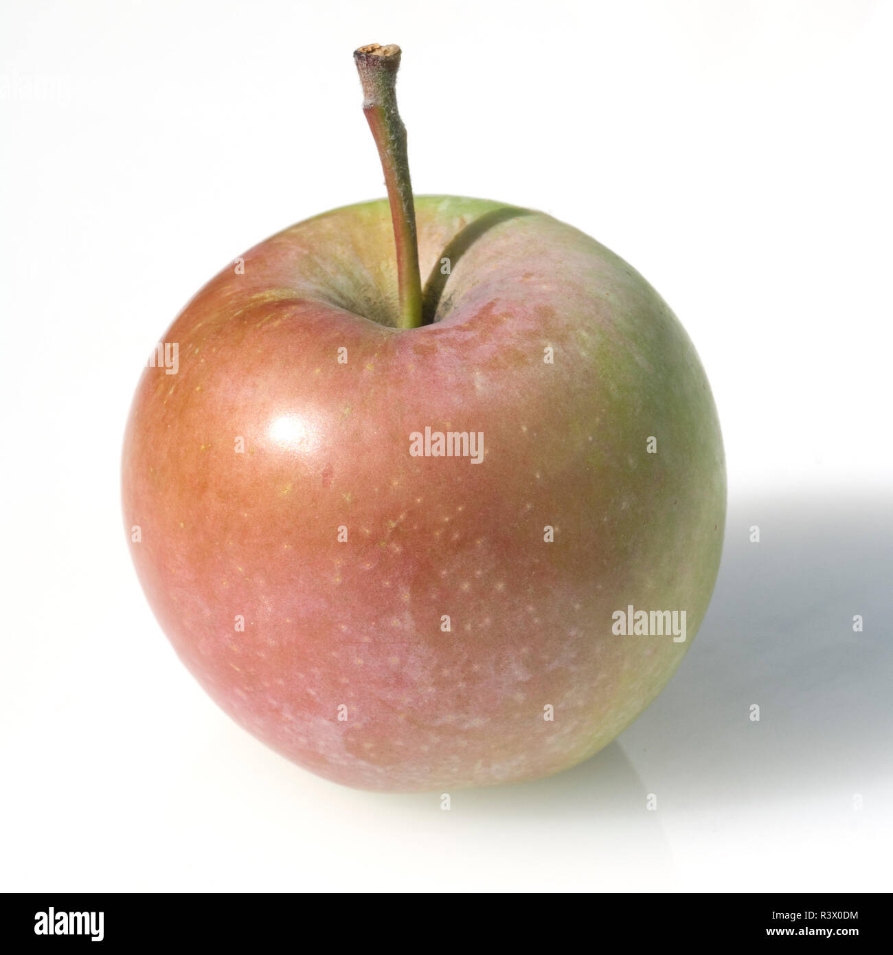 Pink Lady, Apfel, Malus, domestica - Stock Image