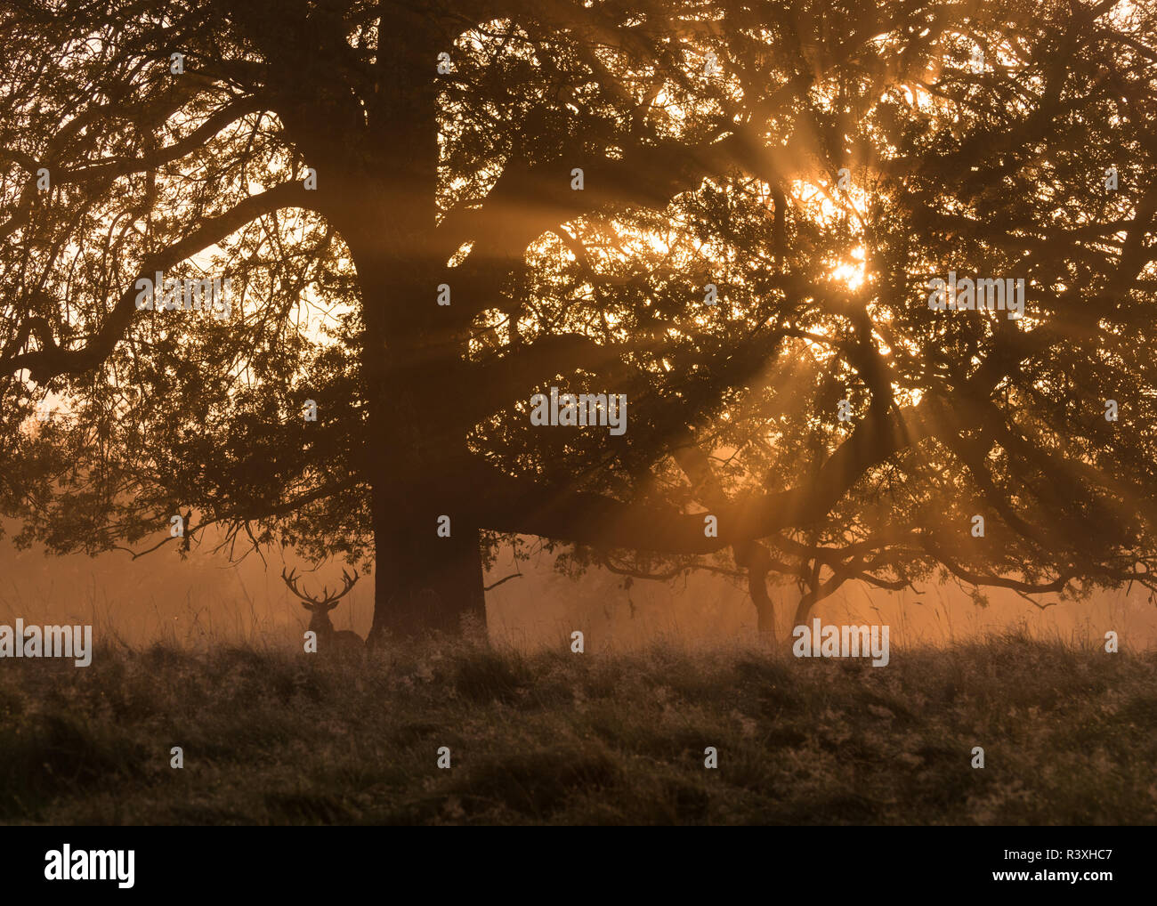 The Watcher In the Mist - Stock Image