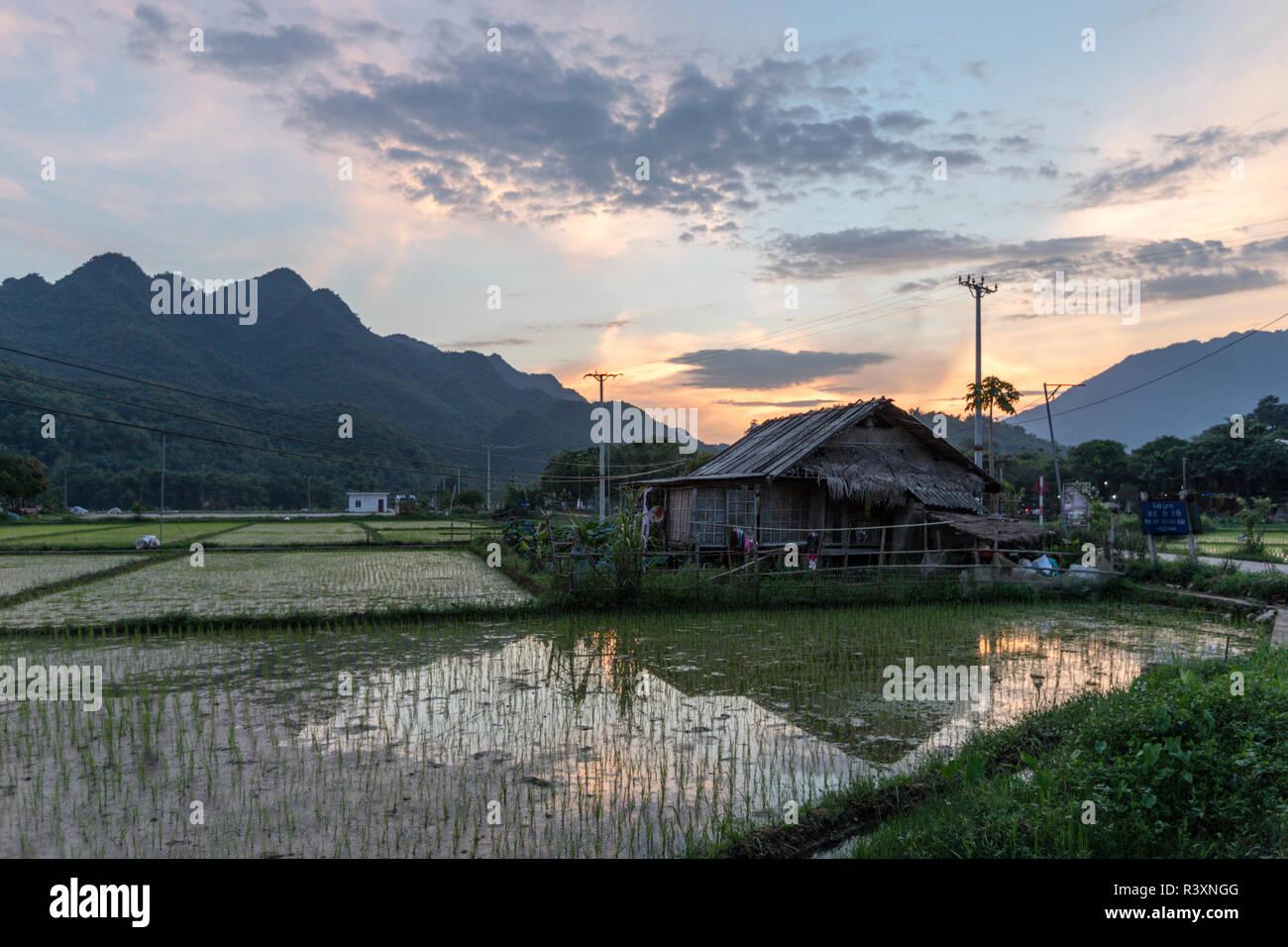 Mai Chau rice field, North Vietnam - Stock Image