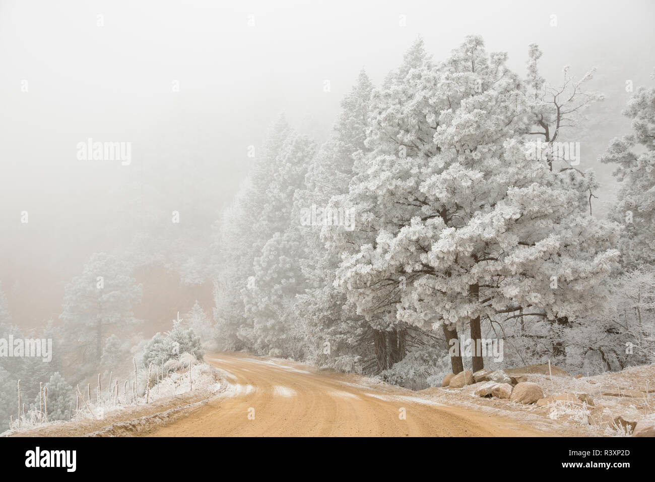 USA, Colorado, Front Range. Road through frost-covered forest. - Stock Image