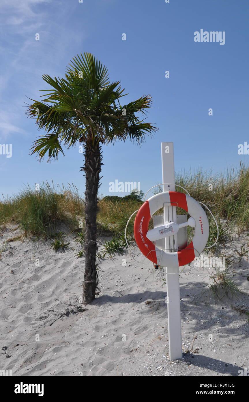 palm tree,sandy beach,ambulance,first aid,palm beaches frederikshavn - Stock Image