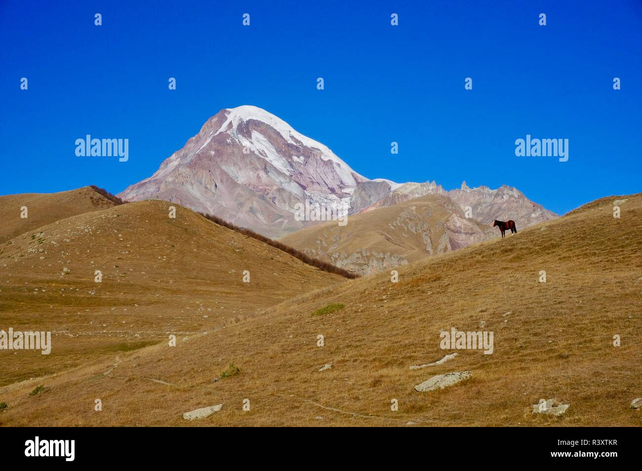 A horse stops in front of Mount Kazbegi, in the Caucasus mountains of Georgia - Stock Image