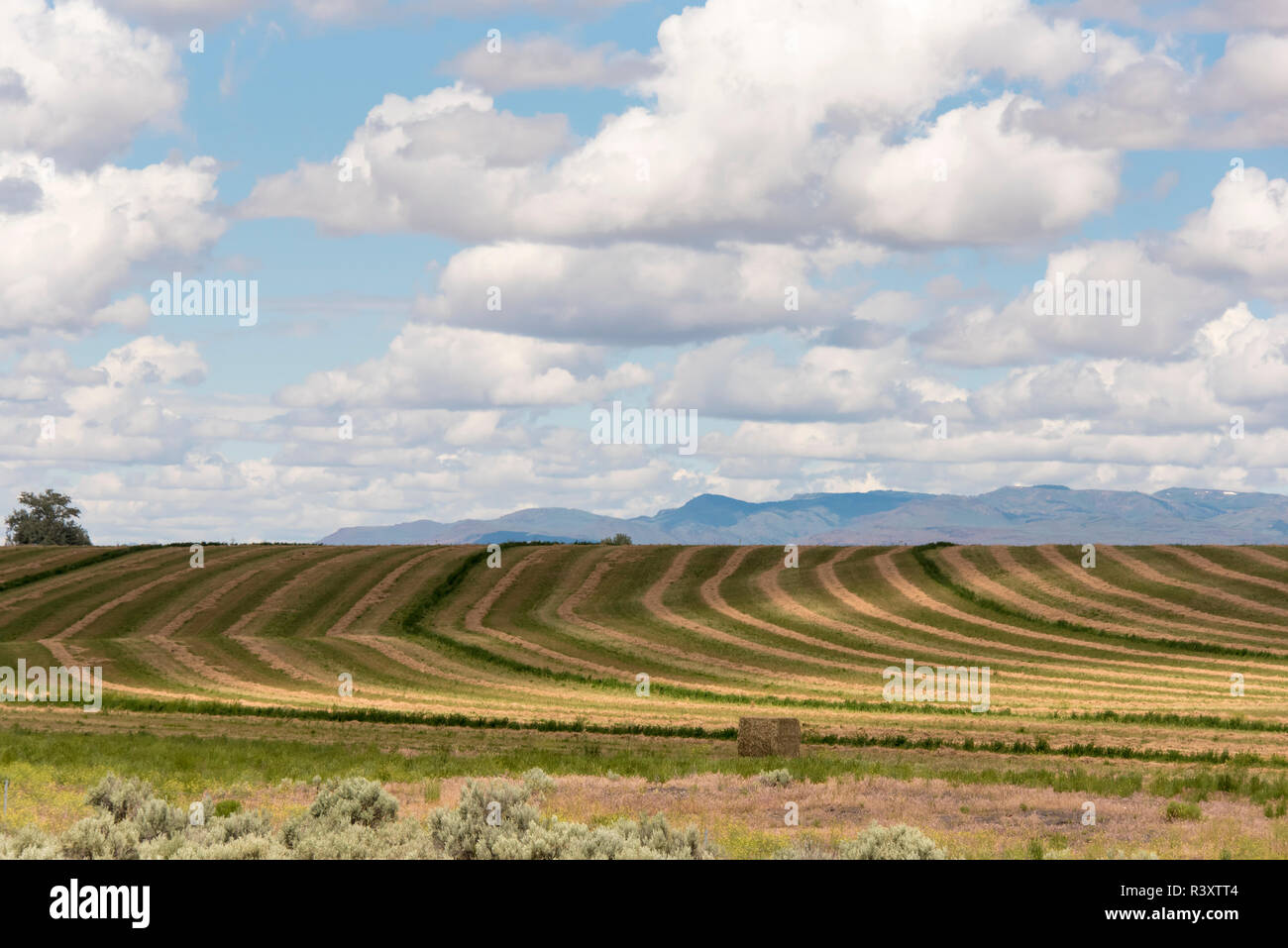 USA, Idaho. Agricultural patterns and dramatic sky - Stock Image