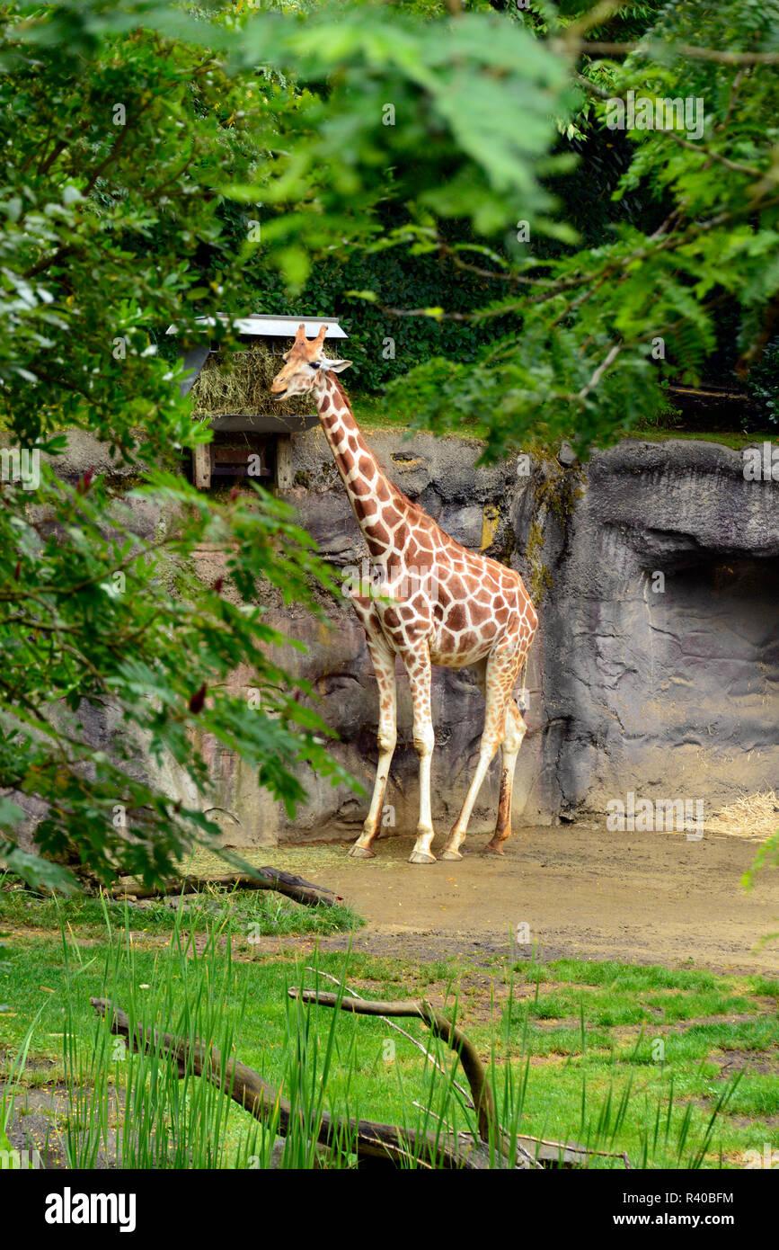 Oregon Zoo: Portland Zoo Stock Photos & Portland Zoo Stock Images