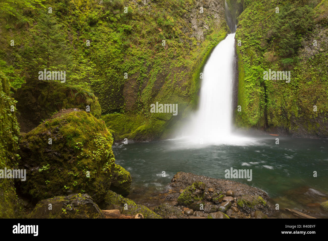 USA, Oregon, Columbia River Gorge. Wahclella Falls landscape. Credit as: Don Grall / Jaynes Gallery / DanitaDelimont. com - Stock Image
