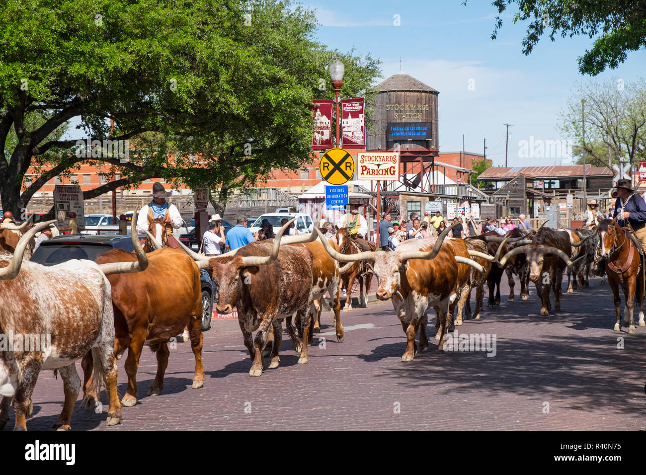 Usa Texas Fort Worth Stockyards Cattle Drive Stock Photo Alamy