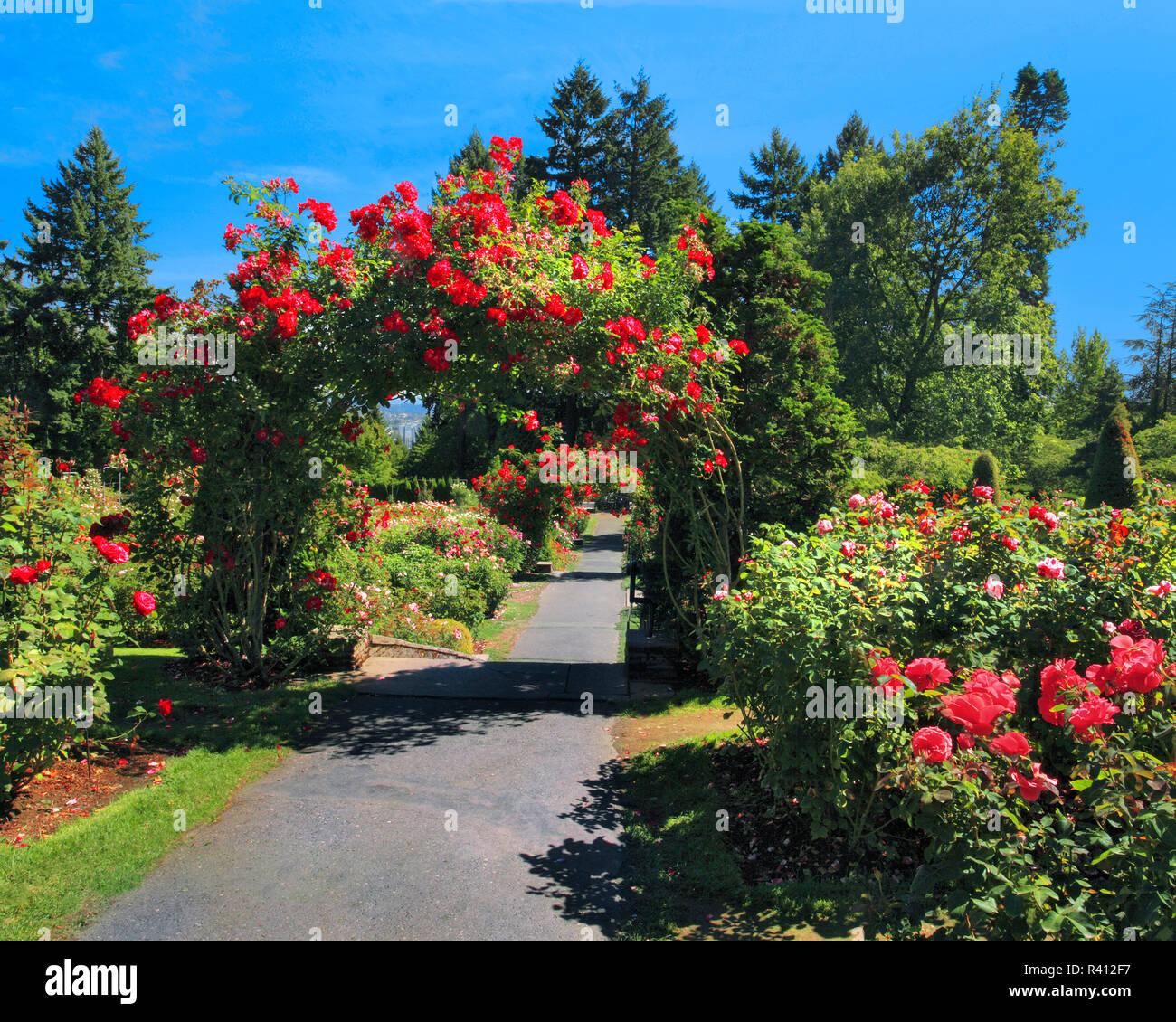 Usa Oregon Portland Portland Rose Garden In Washington Park