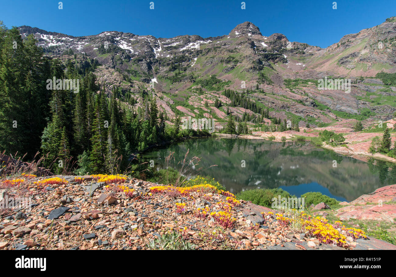 Twin Peaks Wilderness, Wasatch Mountains, Utah - Stock Image