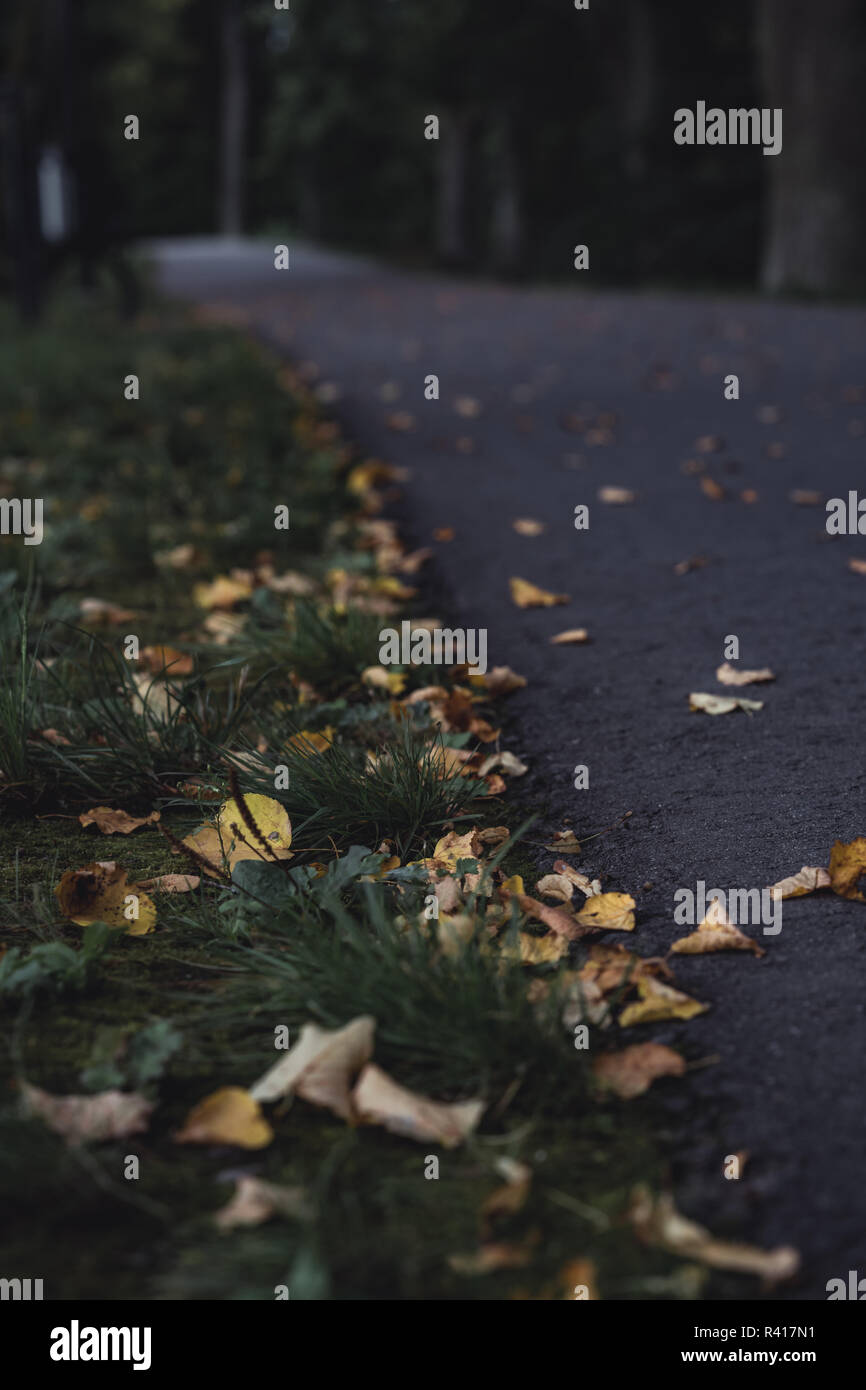Moody, Dark Photo of the Road in a Park, Between Woods - Closeup View of Leaves With Blurred Background -Desaturated, Vintage Look with Space for Text - Stock Image