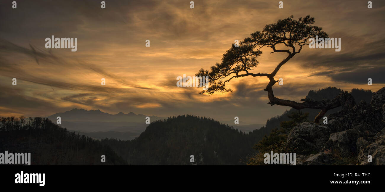 Lonely tree Kinga with Tatra mountains from Pieniny mountains in sunset, Poland - Stock Image