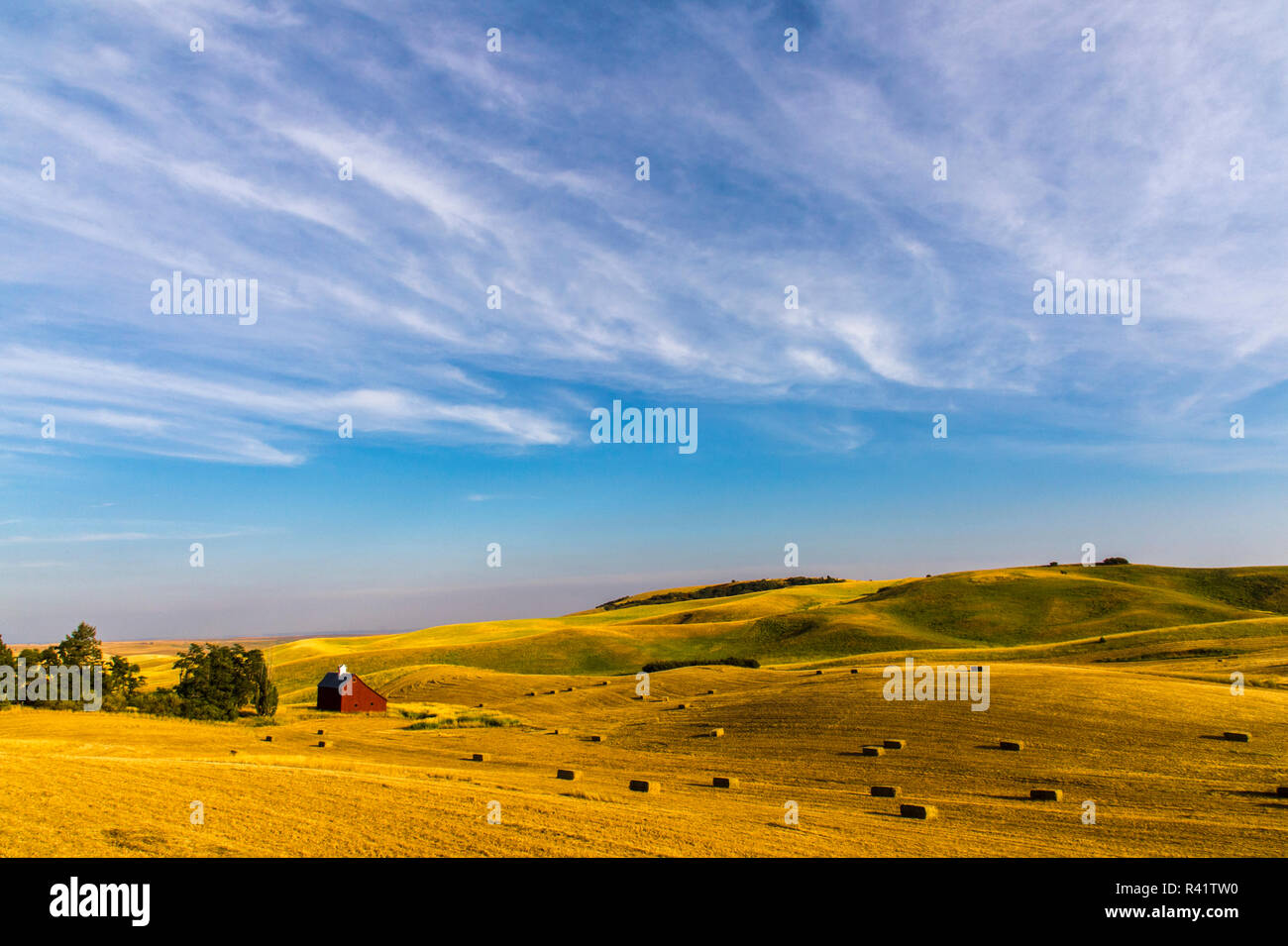 USA, Washington State, Farm, Agriculture - Stock Image