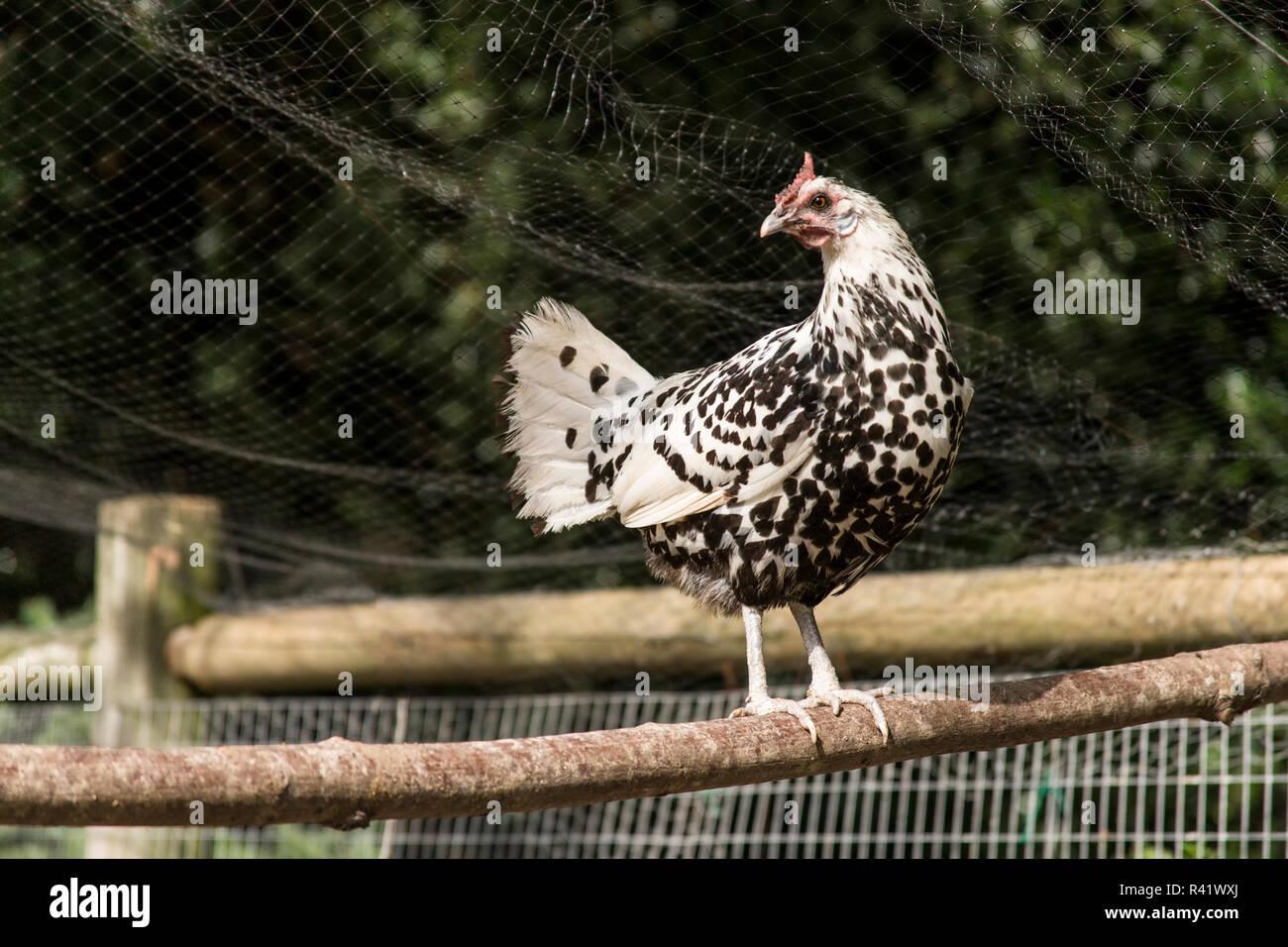 Animal Confinement Stock Photos & Animal Confinement Stock