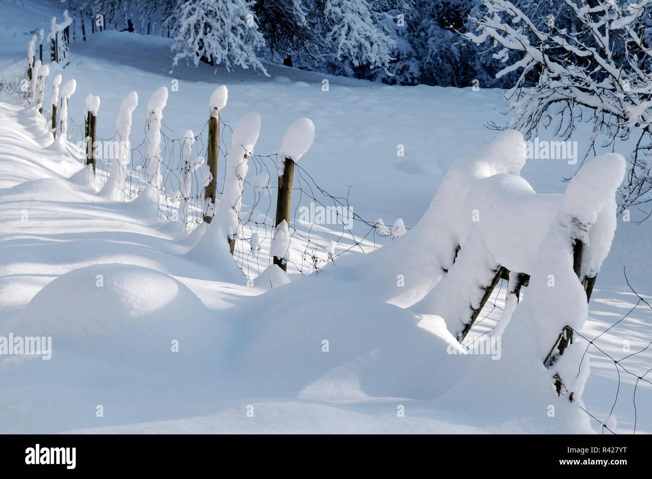 zaunpähle in snow Stock Photo