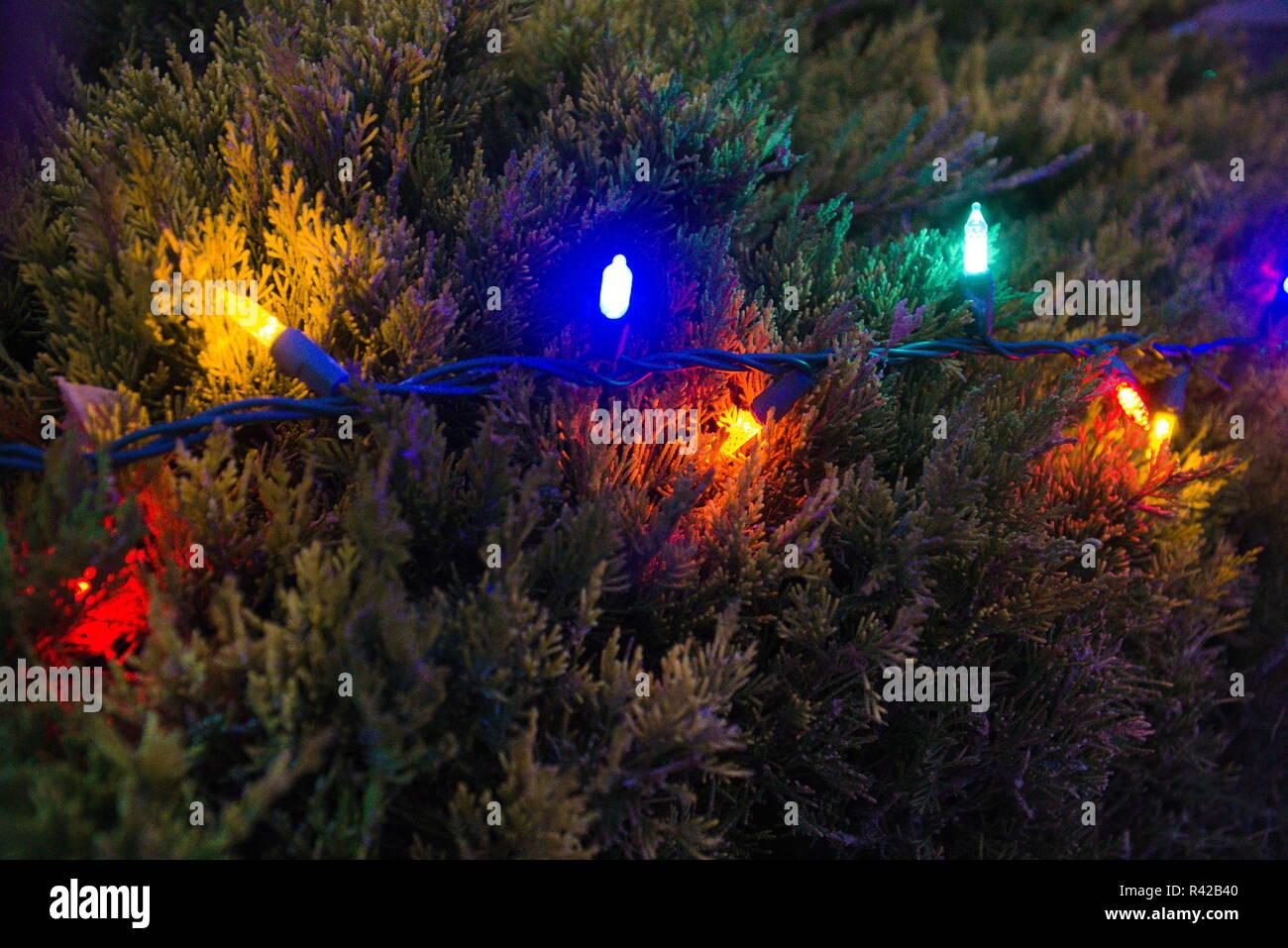 Christmas Bush Lights.Christmas Bush Lights Stock Photos Christmas Bush Lights