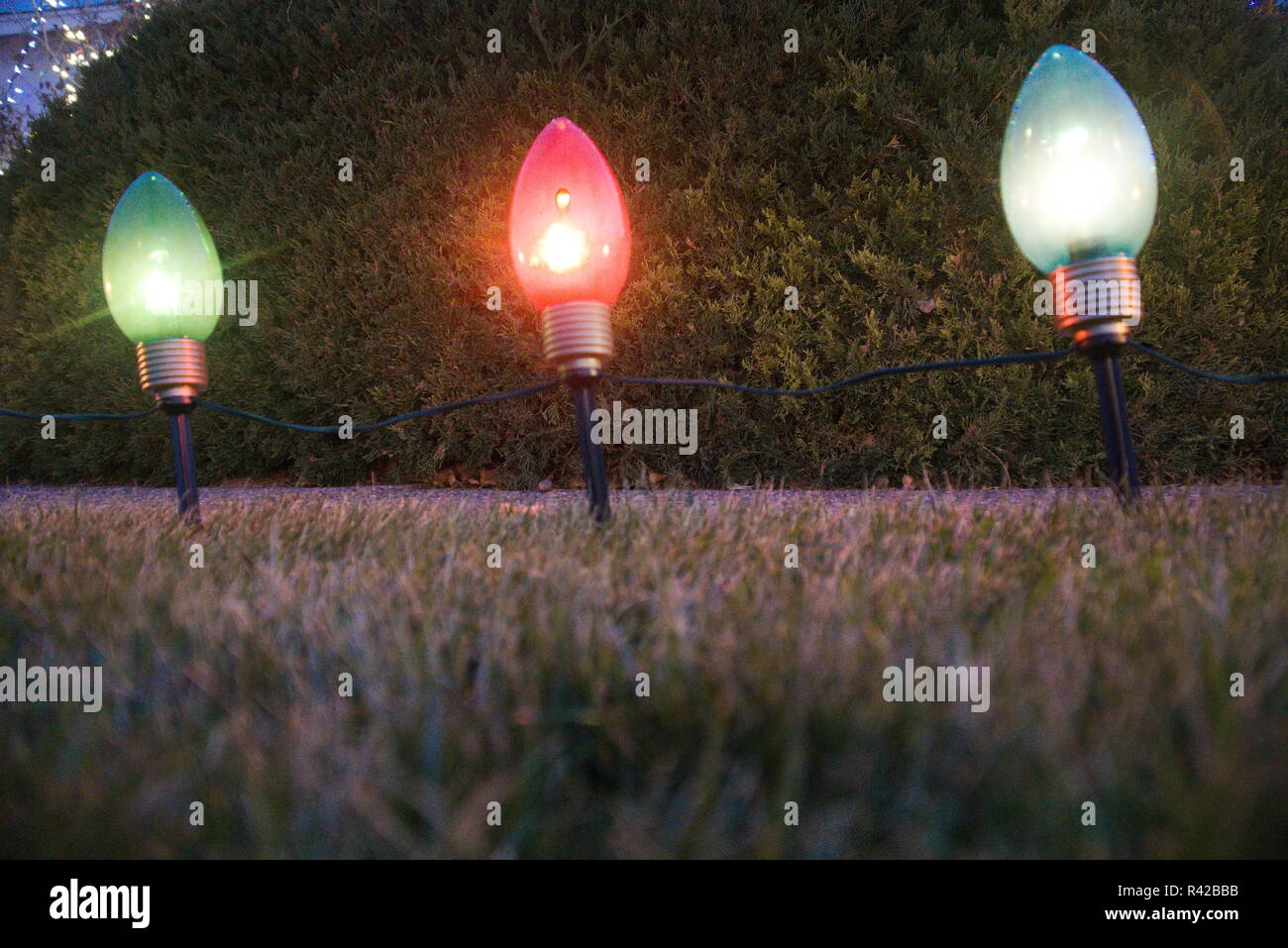 Christmas Bush Lights.Christmas Lights In A Row In The Grass With A Bush Behind