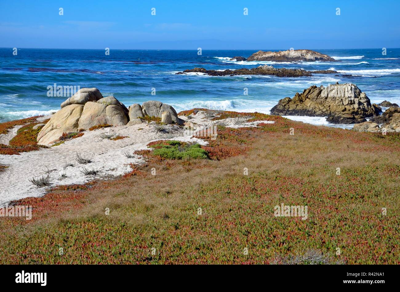 Monterey Peninsula near Pebble Beach in California, coast view towards the Pacific ocean, rocky coast and colorful plants on white sand, September Stock Photo