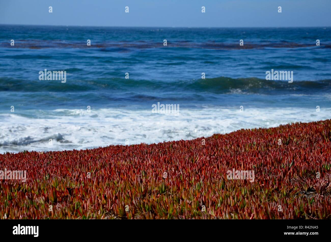 Monterey Peninsula near Pebble Beach in California, coast view towards the Pacific ocean, rocky coast and colorful plants on white sand, September - Stock Image