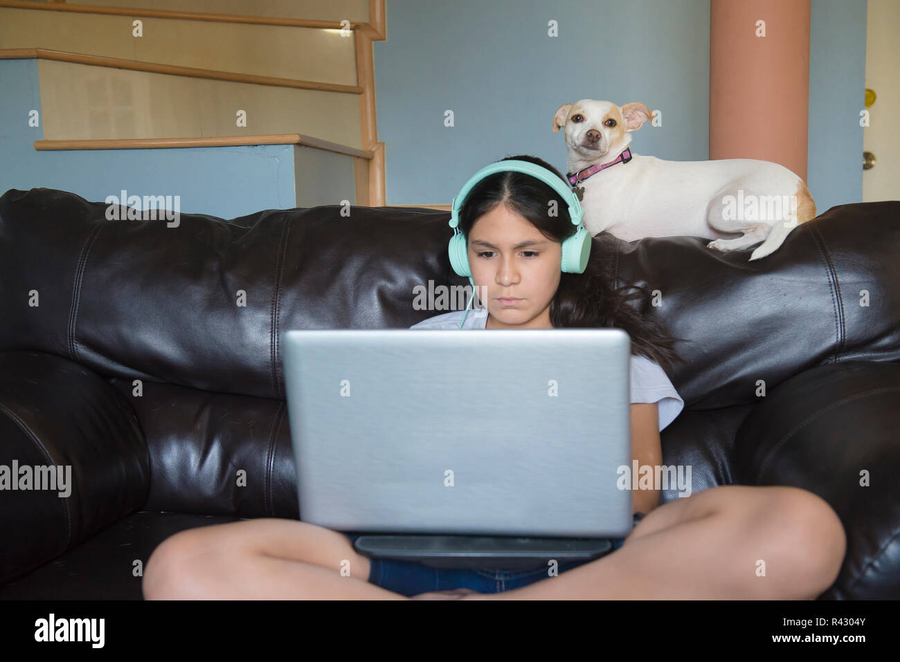 Pets in the home as family member.  Latin-Mexican Teenager listening to music on a laptop with her dog on a sofa inside the home - Stock Image