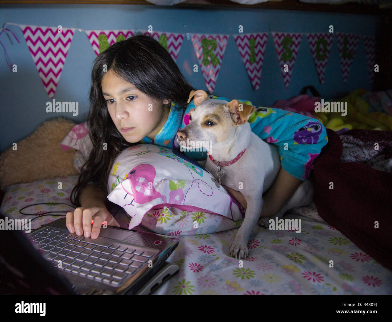 Pets in the home as family member. A teenager and her dog are very bussy watching videos on a laptop inside the room on the bed - Stock Image