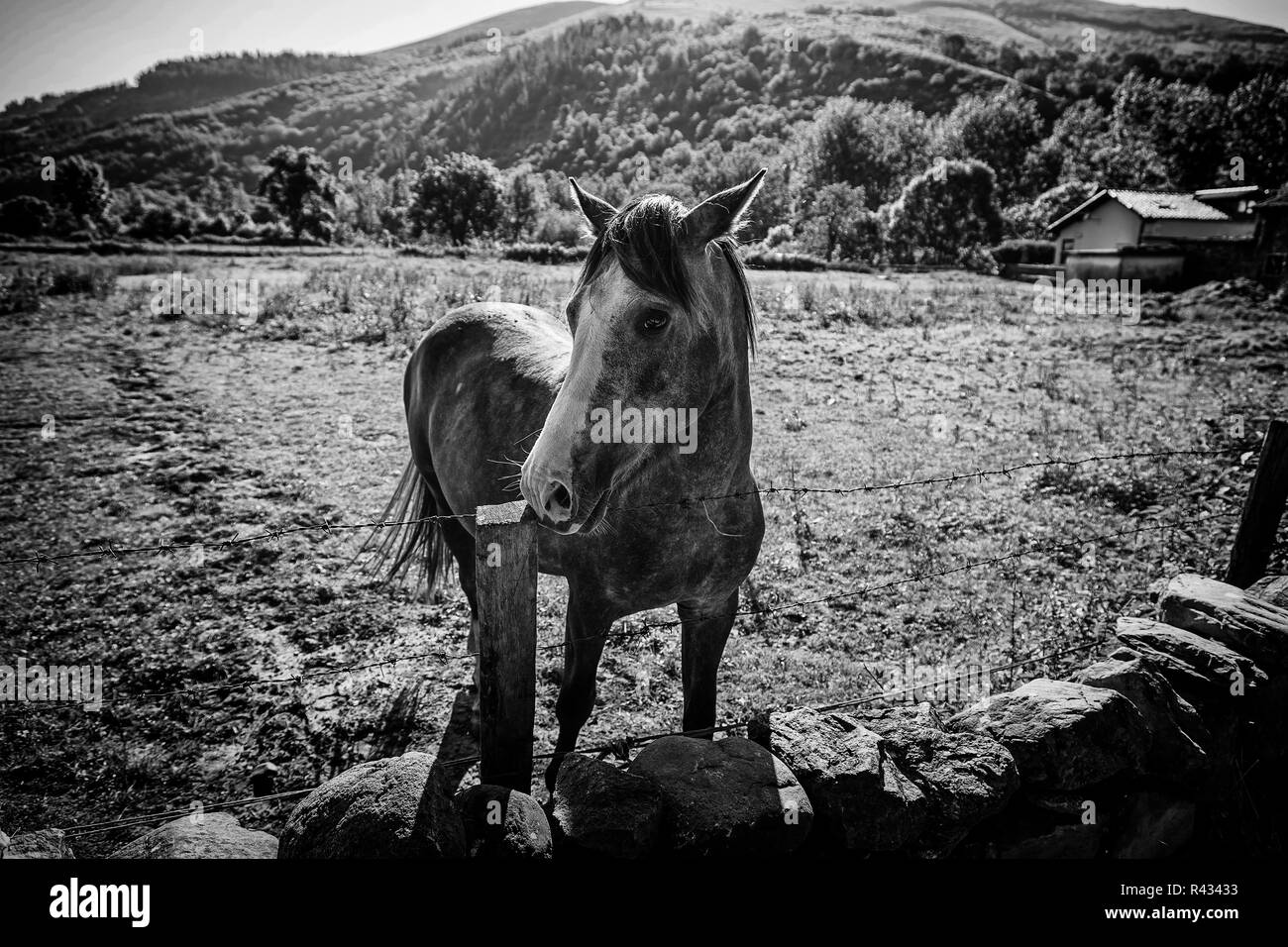 Free horse on the mountain, detail of an animal on the mountain mammal, animal Spanish Stock Photo
