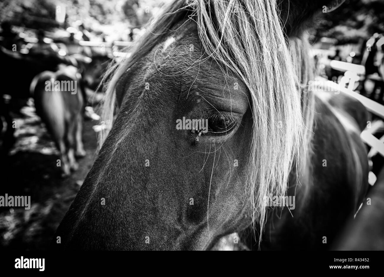 Wild horse, detail of a wild mammal in the wild, animal farm, strength and nature - Stock Image