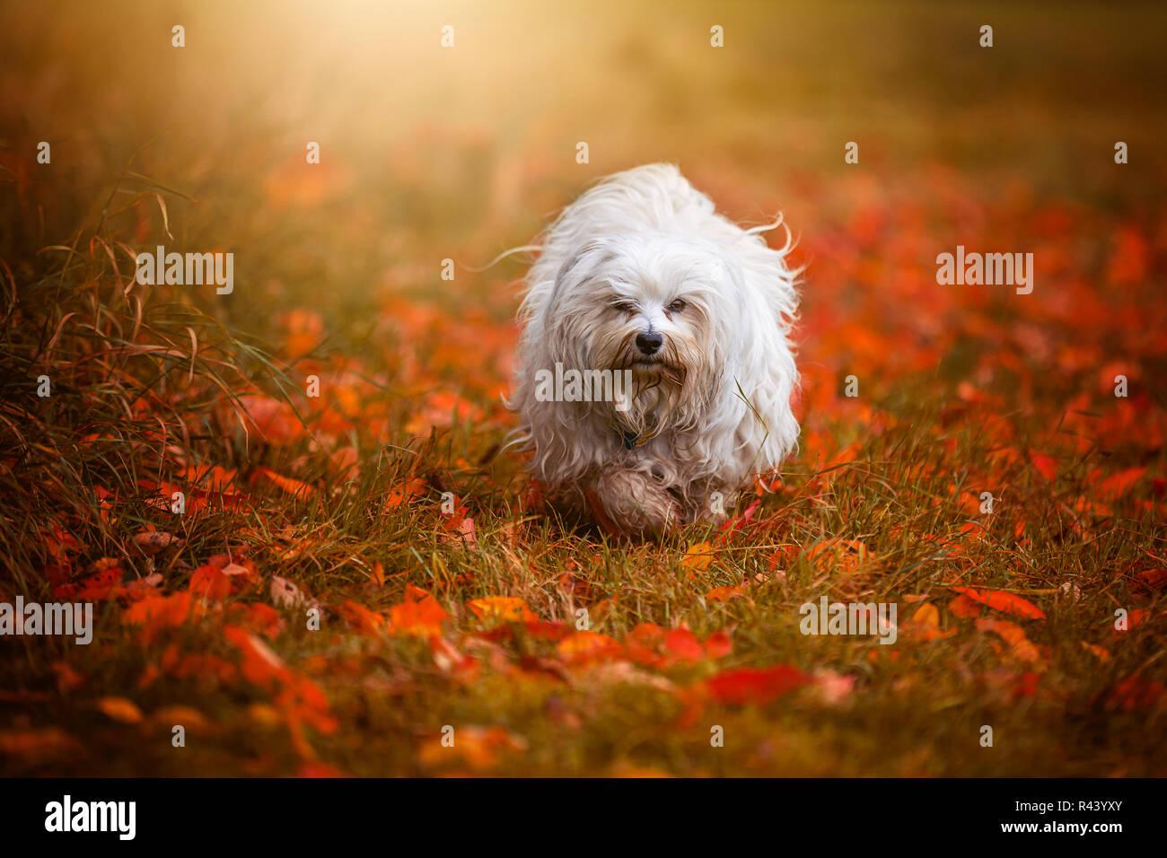 wonderful autumn Stock Photo