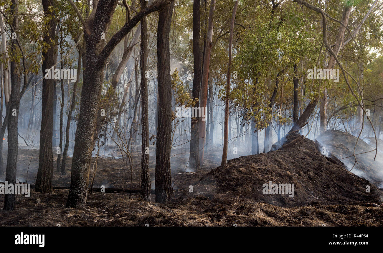 Just after a bush had passed through Australian bush land - Stock Image
