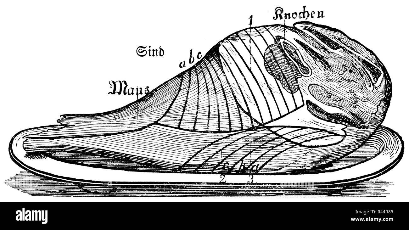 leg of mutton, - Stock Image