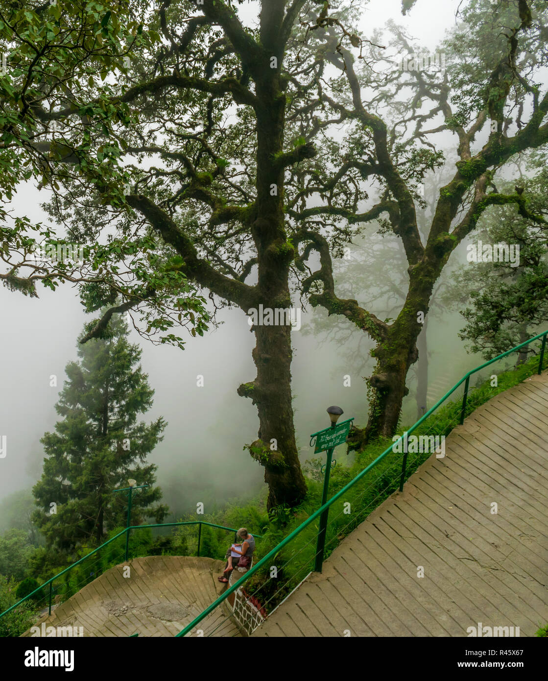 A misty mountain road- a lady reading a book in solitude- a chill in the air, Landour - Stock Image