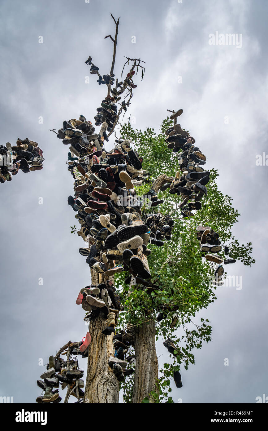 The Shoe Tree Stock Photos Amp The Shoe Tree Stock Images