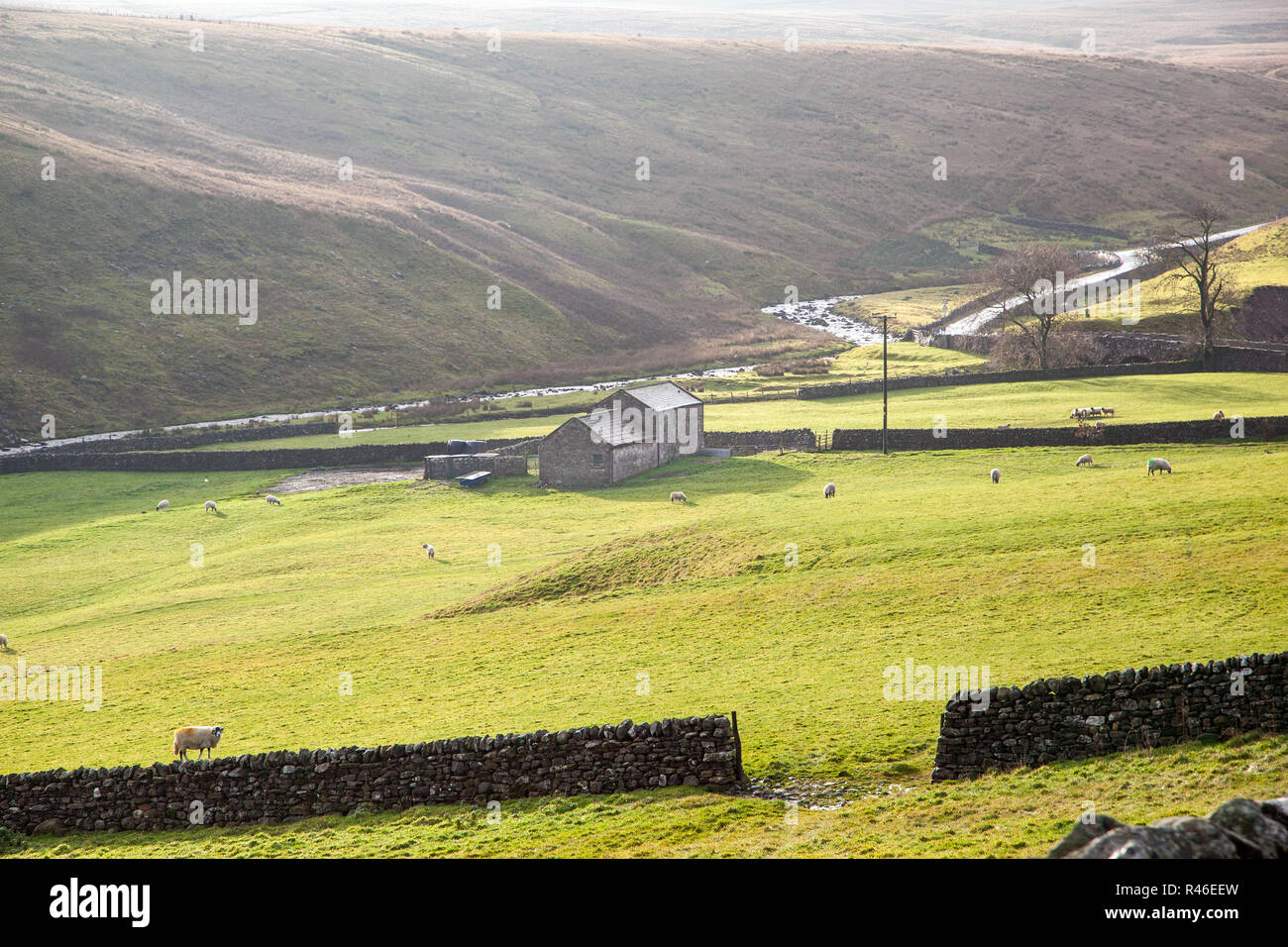 View of the  sheep in the rolling farmland  landscape of the Teesdale valley County Durham North  Pennines England UK - Stock Image